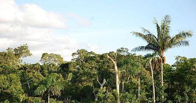Lasy równikowe i ich wycinanie