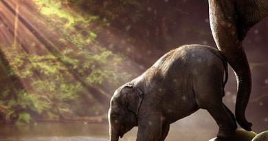6 ciekawostek ze świata zwierząt